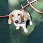 Frankie at dog daycare